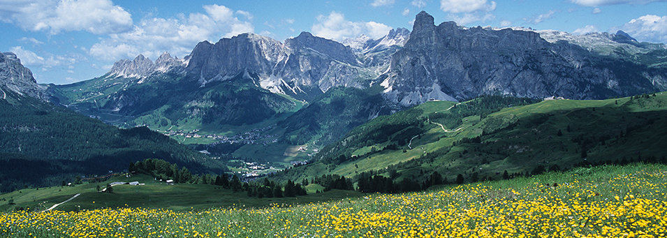A summer meadow in the Dolomites, Italy.